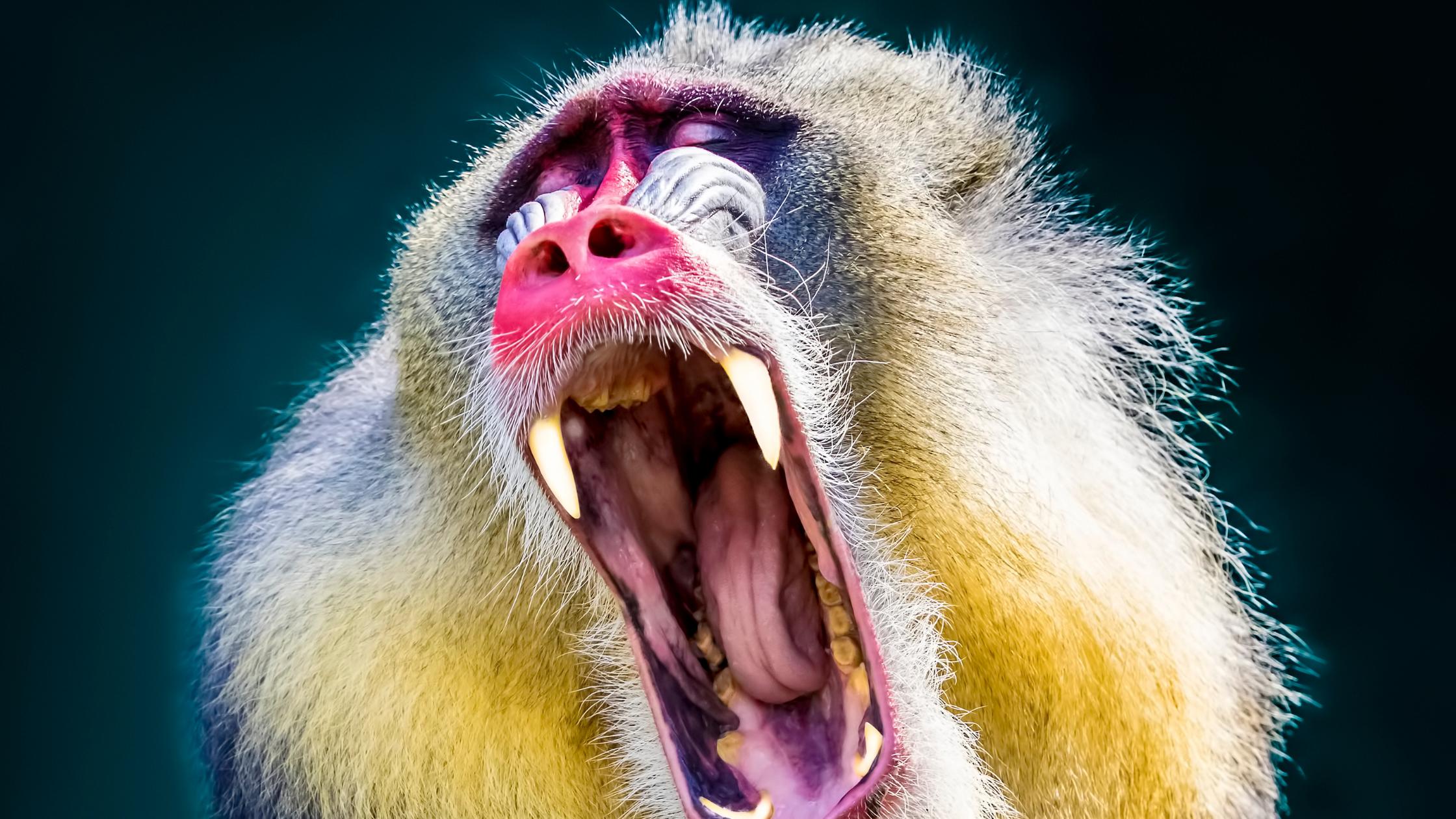 le-persone-urlano-come-le-scimmie.png